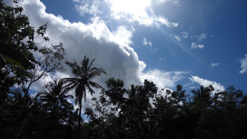 Skog och molnig himmel arkivfoto
