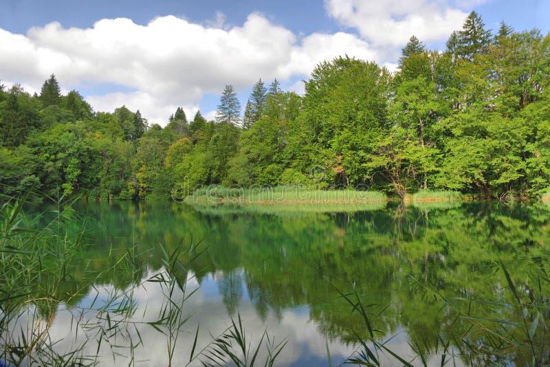 Skog och sjöar royaltyfri bild