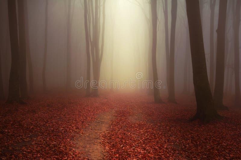 Skog och slinga för saga dimmig till och med sidorna royaltyfri fotografi