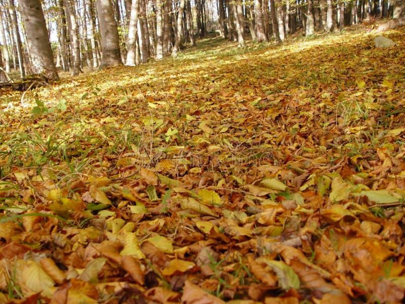 Download Skog oktober arkivfoto. Bild av trees, fallet, fall, leaf - 25932