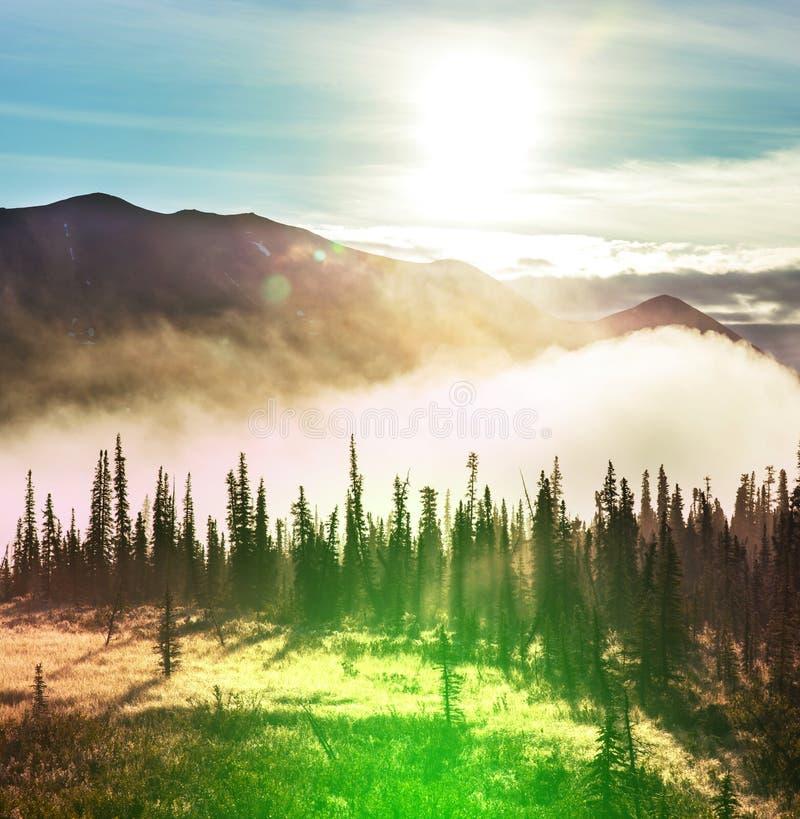 Skog på Alaska royaltyfri fotografi