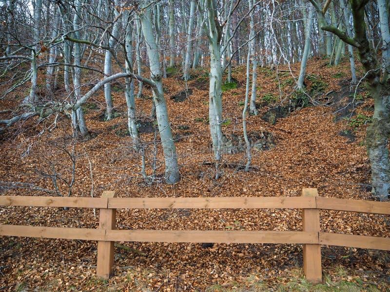 Skog på kullen på kusten av det baltiska havet arkivbild