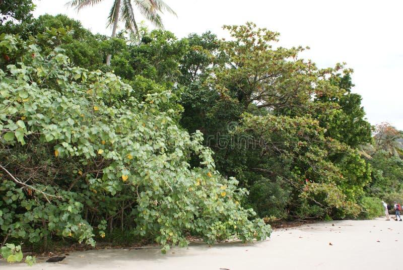 Skog på stranden royaltyfri fotografi