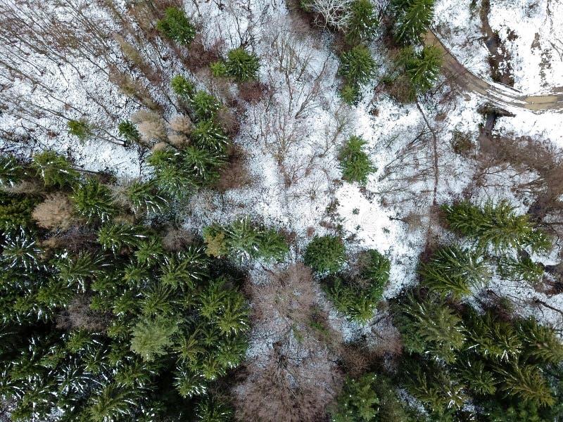 Skog på vintern Time Flyg- sikt från ett surr som ner ser arkivfoton