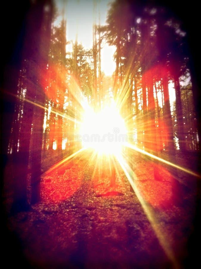 skog poland royaltyfri bild