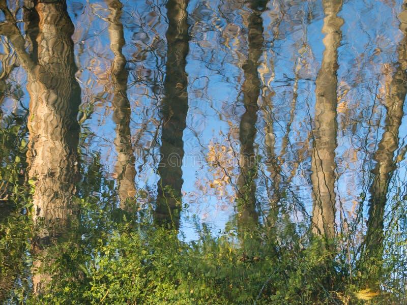 skog reflekterad i floden royaltyfri foto