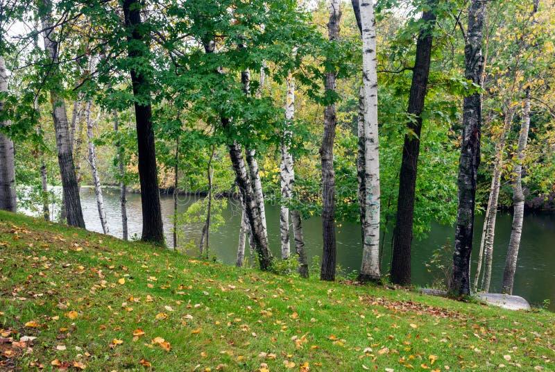 Skog sjö i den tidiga hösten, Monroe County, Wisconsin, USA royaltyfria bilder