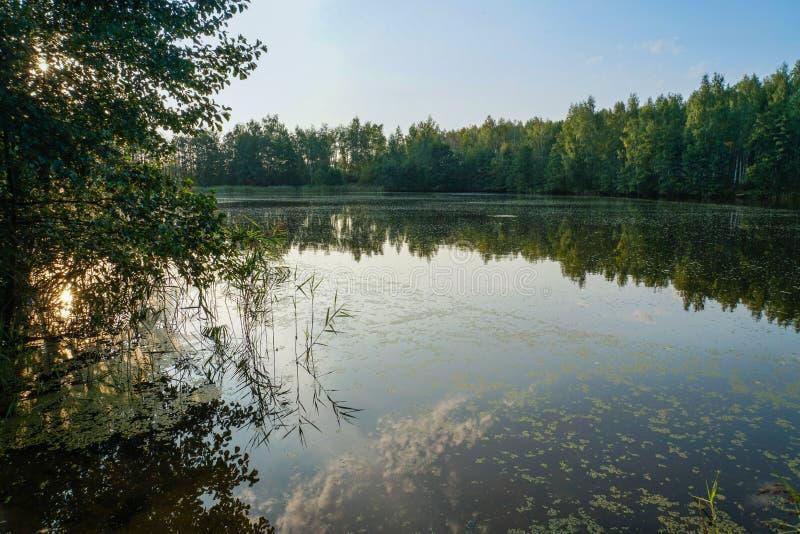 Skog sjö i strålarna av aftonsolen arkivfoto