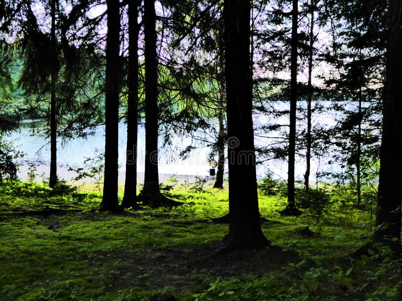 Skog sjö med lifebelten på stranden royaltyfria bilder