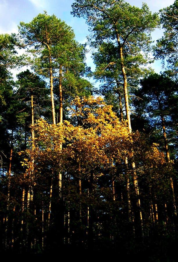 Skog som är blandad i höstsäsong royaltyfri fotografi