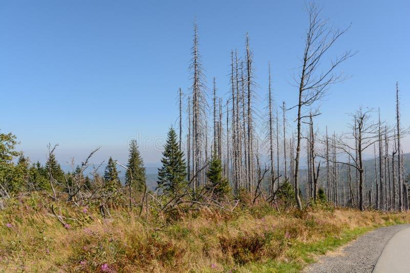 Skog som dör i det Dreisesselberg området arkivfoto
