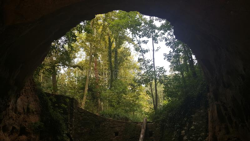 Skog som från inre ses av en grotta arkivfoton