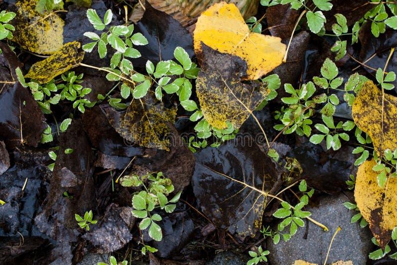 Skog som malas i höst fotografering för bildbyråer