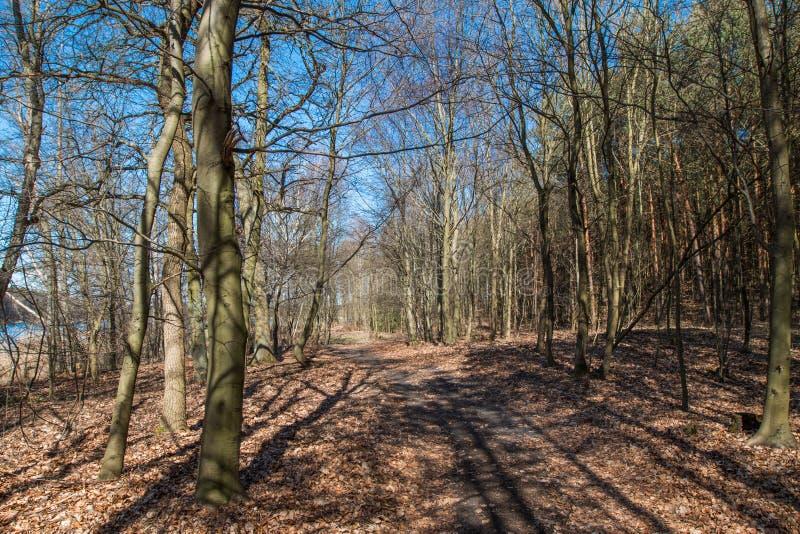 Skog som ses i tidig vår royaltyfria bilder