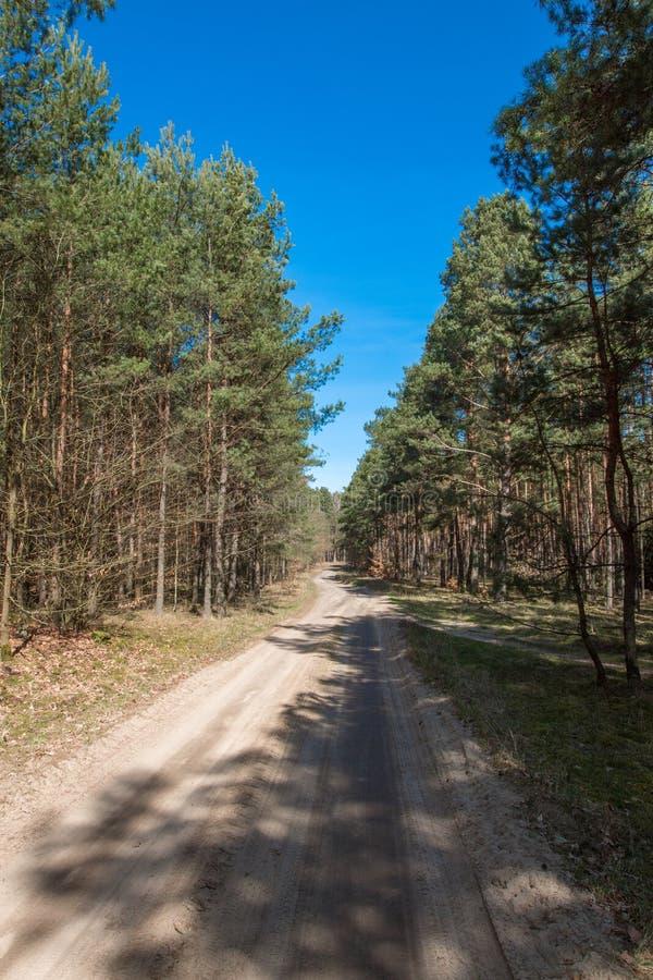 Skog som ses i tidig vår royaltyfri foto