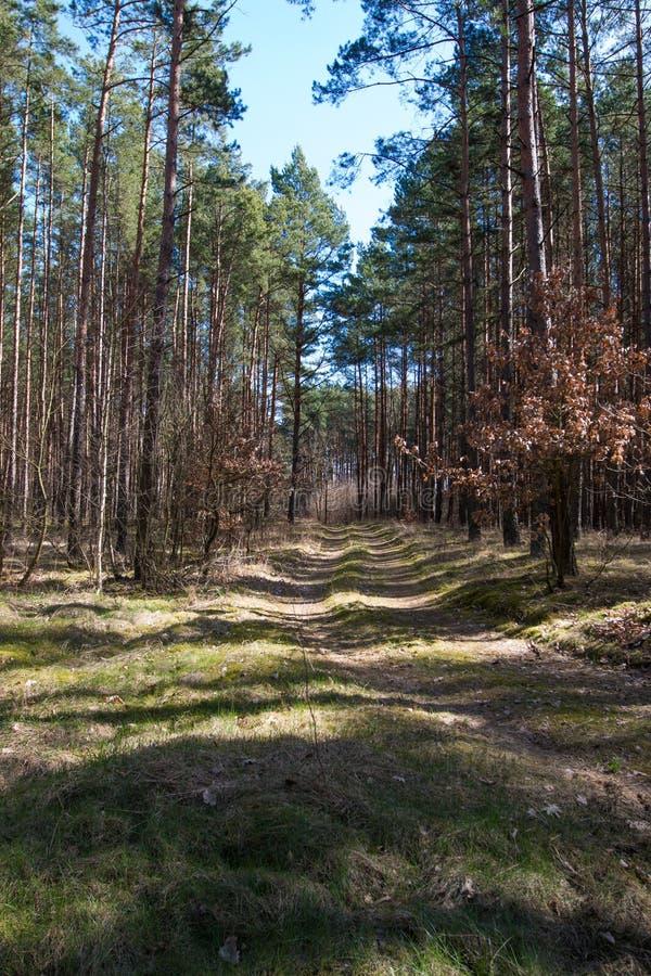 Skog som ses i tidig vår royaltyfria foton