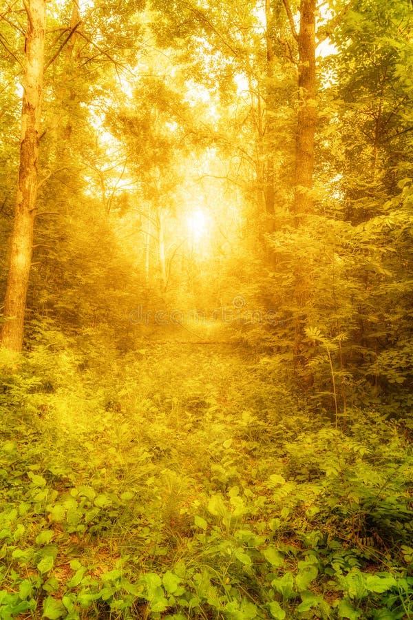 skog som skiner fotografering för bildbyråer