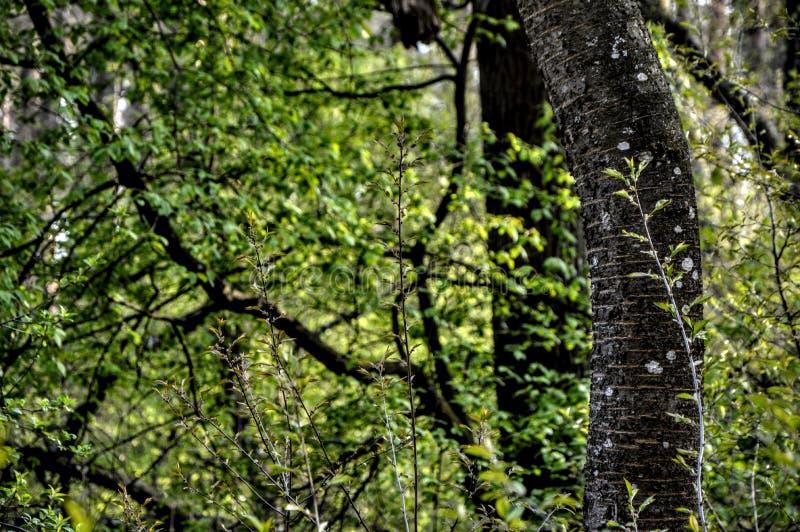 Skog träd arkivbild