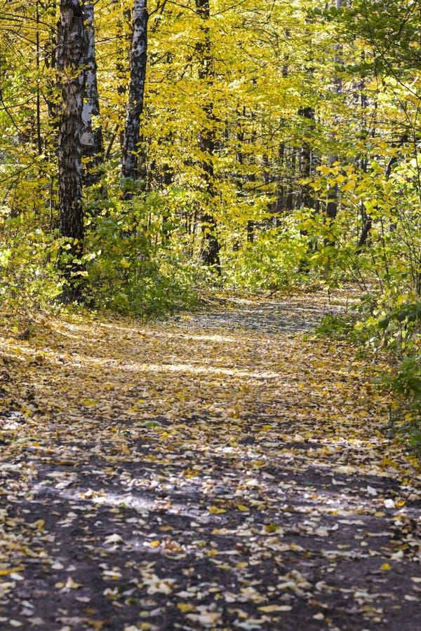 Skog under höstsäsong träd med guld- lövverk royaltyfri bild
