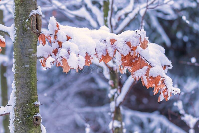 Skog under snömarkisen royaltyfri fotografi