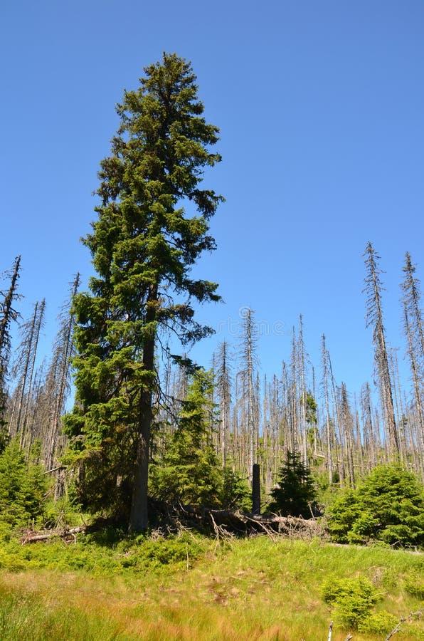 Skogar i den Sumava nationalparken royaltyfri foto