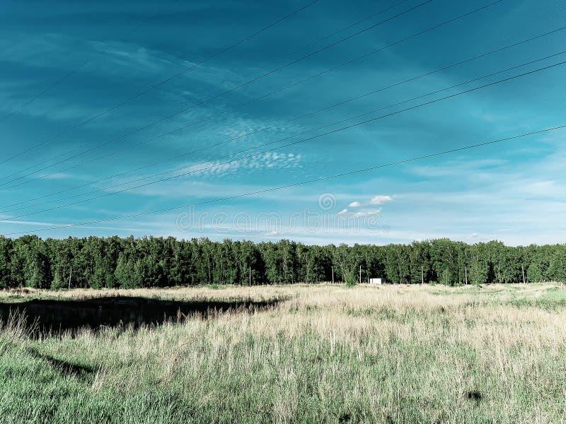 Skogbälte, skoglinje, sikt för djupblå himmel, fält, elektriska trådar arkivfoto