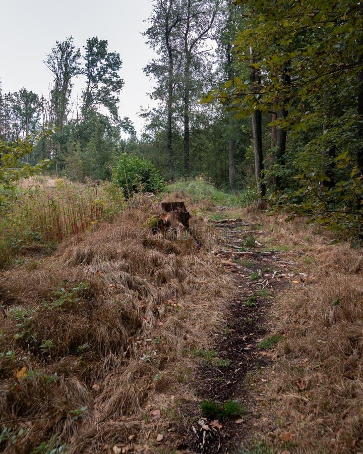 Skogbana med en stubbe arkivbild