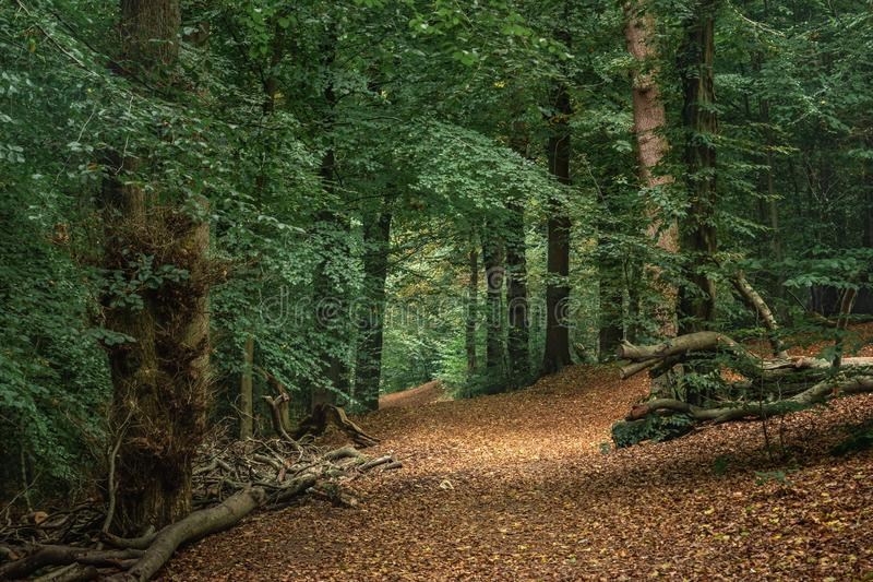 Skogbana på kullen arkivfoton