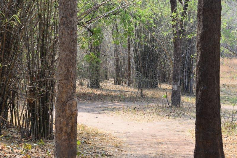 Skogbana till och med Tadoba djurlivfristad i Indien arkivfoto