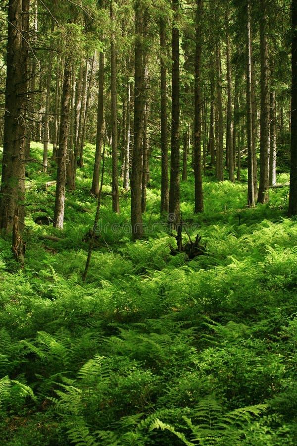 skogberg fotografering för bildbyråer