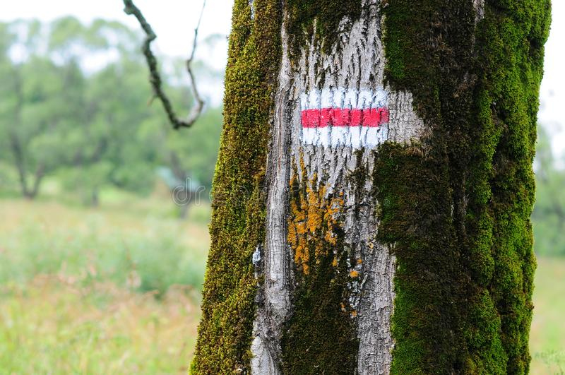 Skogbergbana in med det röda turist- slingatecknet på träd bieszczady berg poland royaltyfri bild