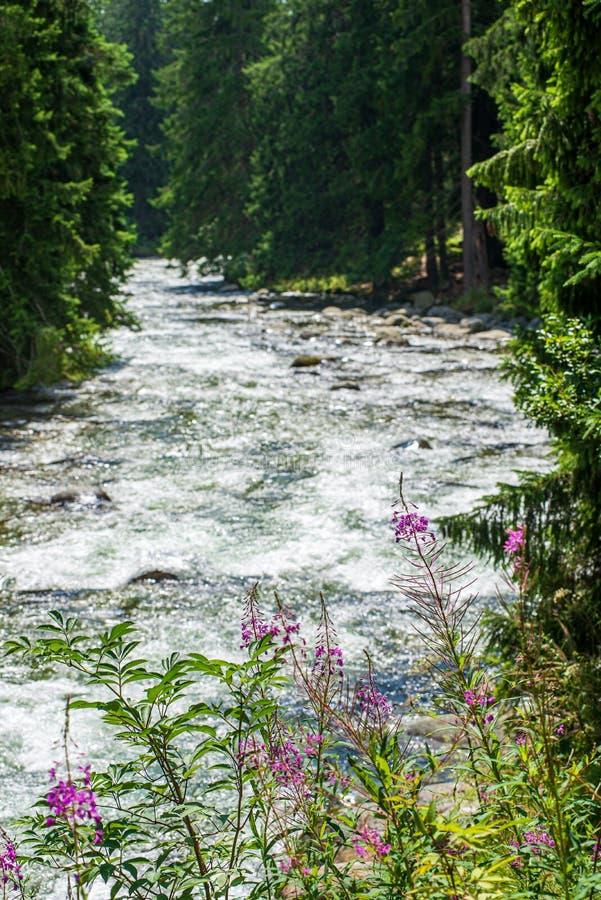 skogbergfloden med vattenfallet ?ver vaggar arkivfoton