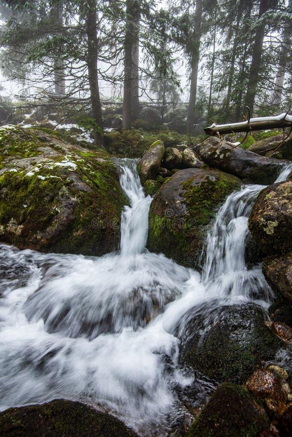 skogbergfloden med vattenfallet ?ver vaggar royaltyfri foto
