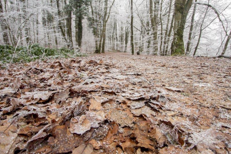 Skogblick på en frostig dag arkivfoton