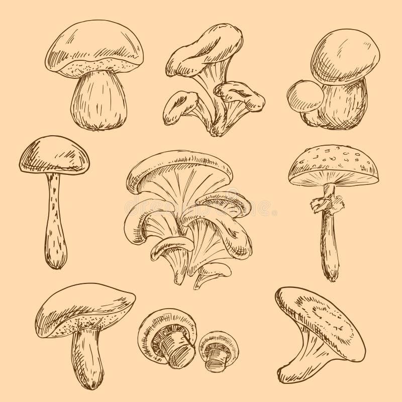 skogchampinjoner skissar uppsättningen vektor illustrationer