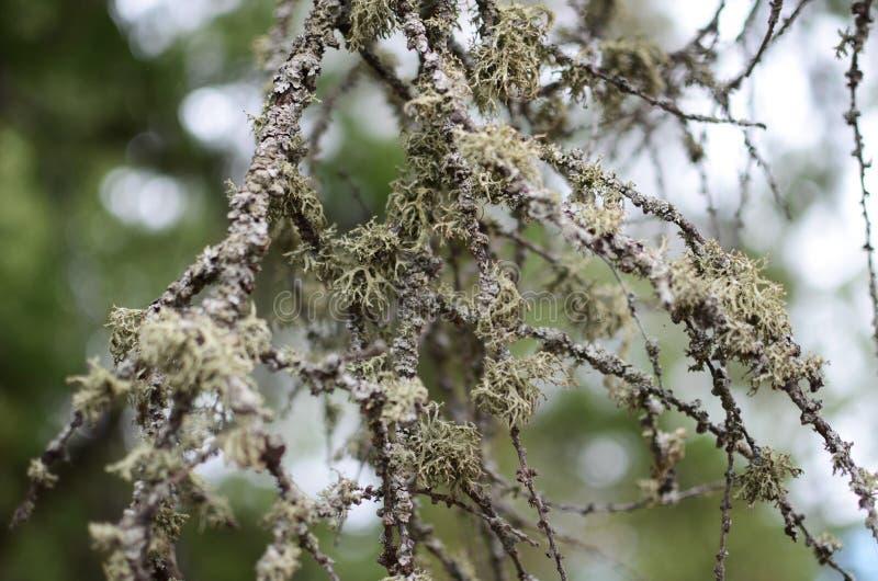 Skogchampinjonfältet planterar träd royaltyfria bilder