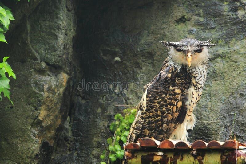 SkogEagle-uggla royaltyfria foton