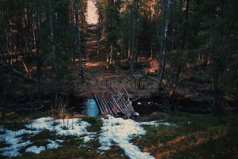 Skogen överbryggar arkivbilder