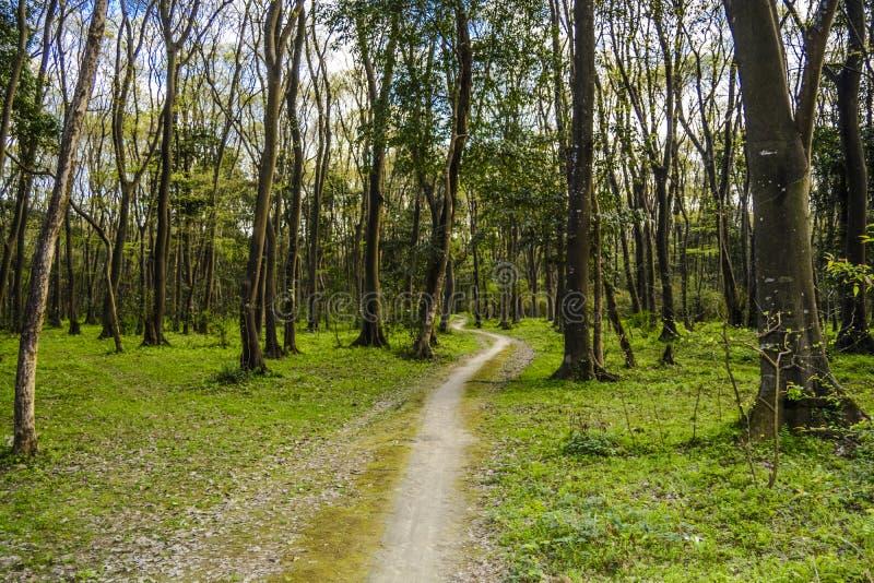 Skogen fotografering för bildbyråer