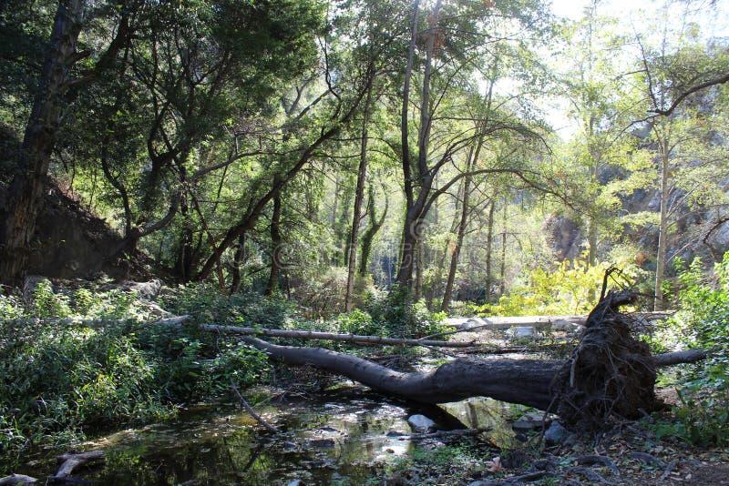 Skogen av de stupade träden arkivfoto