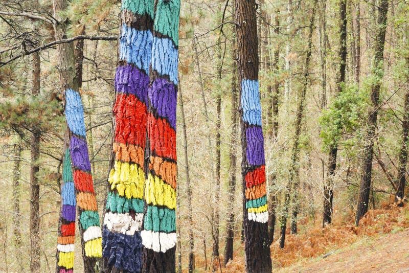 Skogen av Oma, Urdaibai biosfärreserv royaltyfri bild
