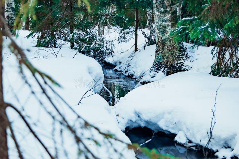 Skogen bryter en bana till och med snön och isen royaltyfria bilder