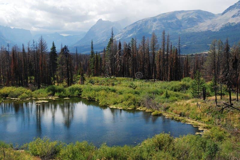 Glaciärnationalpark, Montana, USA fotografering för bildbyråer