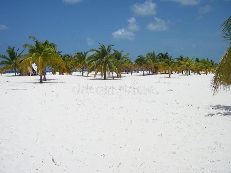 Skogen för 2 strand gömma i handflatan paradis