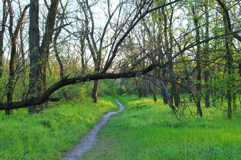 Skogen går fotografering för bildbyråer