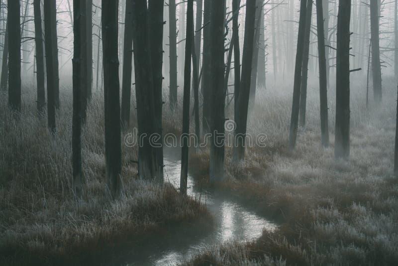 Skogen går arkivbild