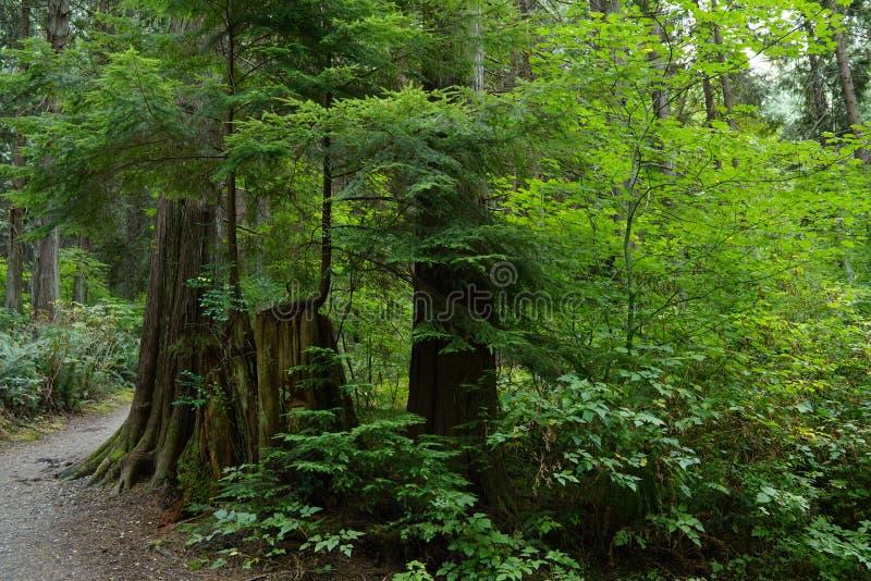 Skogen i Amiralitetet punkt parkerar i Vancouver arkivbilder