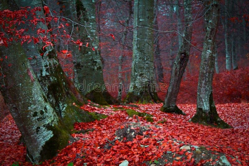 skogen låter vara red royaltyfri fotografi