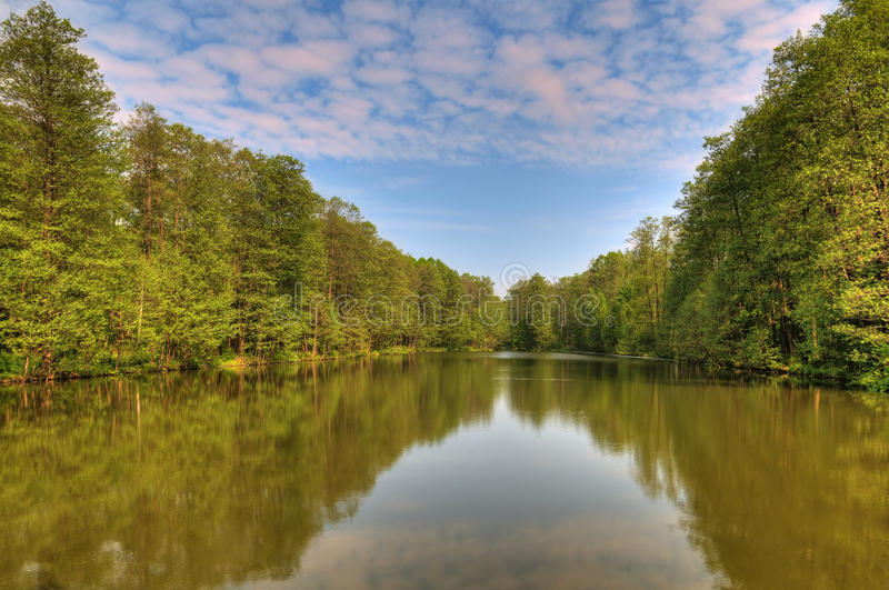 skogen like wild arkivfoton
