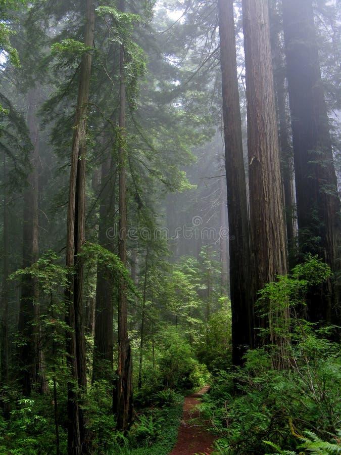 skogen mumlar arkivbild